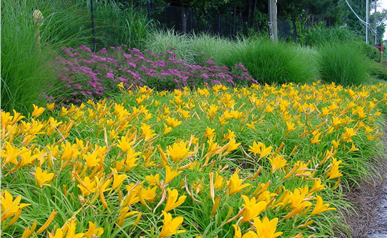 Commercial Landscaping Greenwood Group Landscaping Design And Maintenance Atlanta Ga